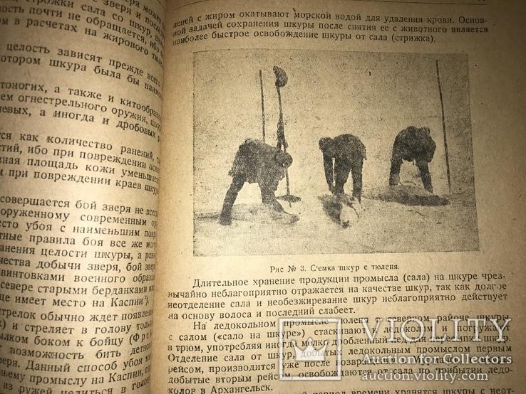 1932 Добыча Змей  Рогов оленей Кости Мамонта Морских зверей, фото №6