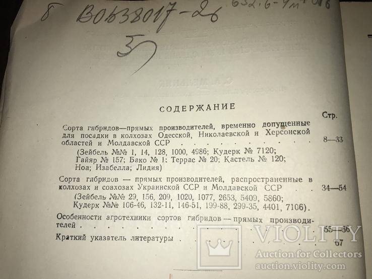 Одесса Сорта винограда Гибриды, фото №4