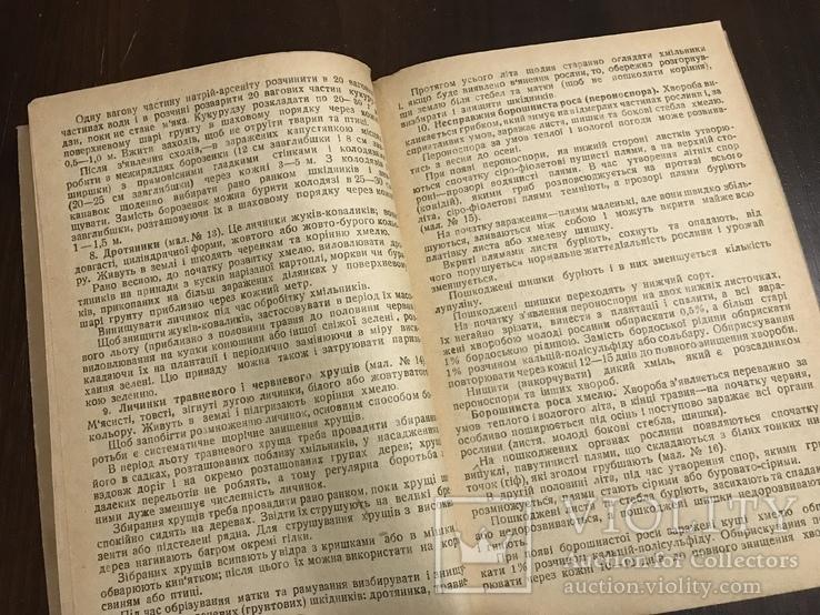 1940 Шкідники та хвороби Хмелю, фото №8