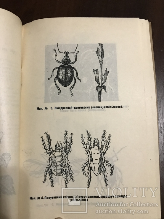 1940 Шкідники та хвороби Хмелю, фото №2