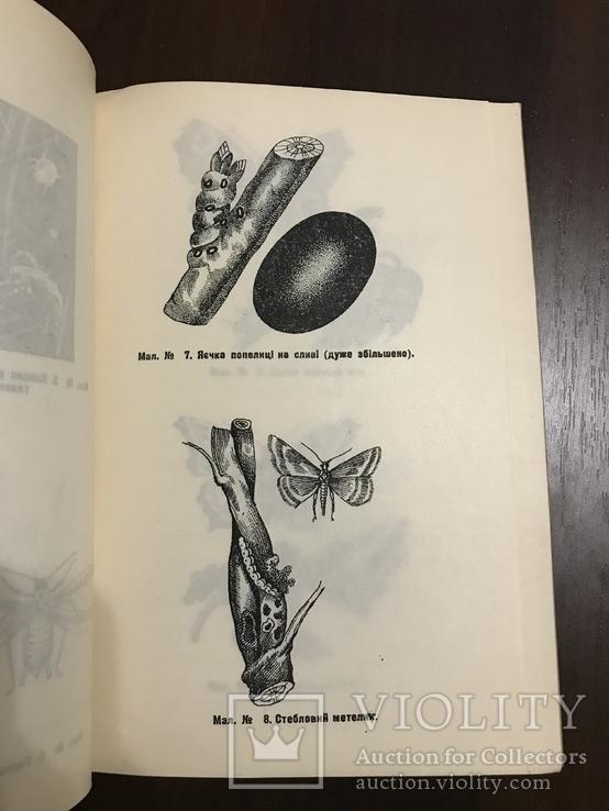 1940 Шкідники та хвороби Хмелю, фото №12