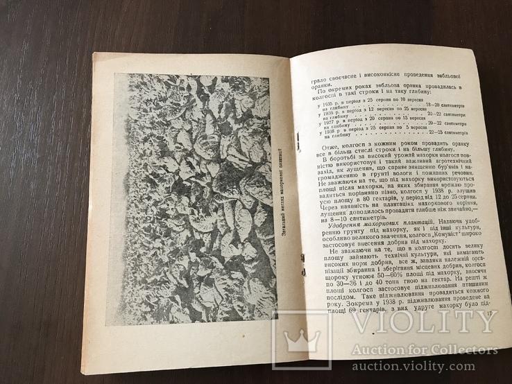 1939 Високі врожаї махорки, фото №8