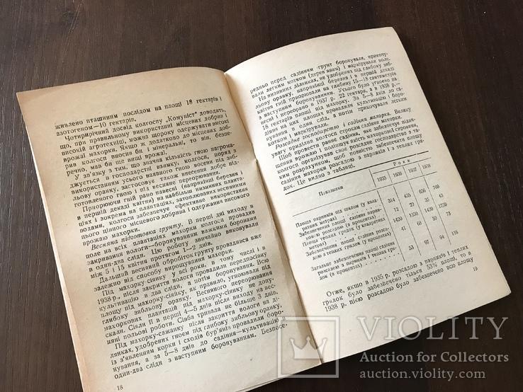 1939 Високі врожаї махорки, фото №9