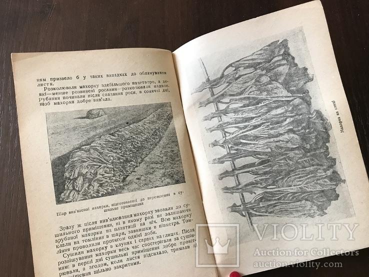 1939 Високі врожаї махорки, фото №12