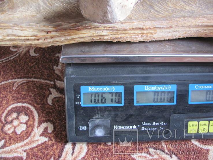 Роги лося 10.670 кг, фото №4