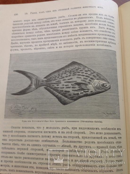 Происхождение  животнаго мира  Д-ра  Вильгельма Гааке  1903 года, фото №8