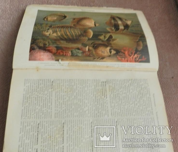 Большая Энциклопедия,т.20,С.-Петербург для библиотек кадетских корпусов и военных училищ, фото №10