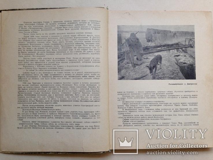 Твой друг   Служебное собаководство  1970  215 с. ил., фото №4