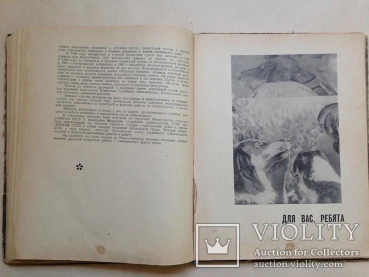 Твой друг   Служебное собаководство  1970  215 с. ил., фото №7
