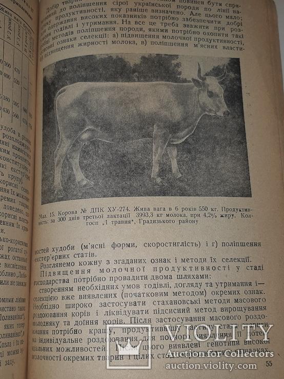 1940 Сiра українська худоба, фото №4