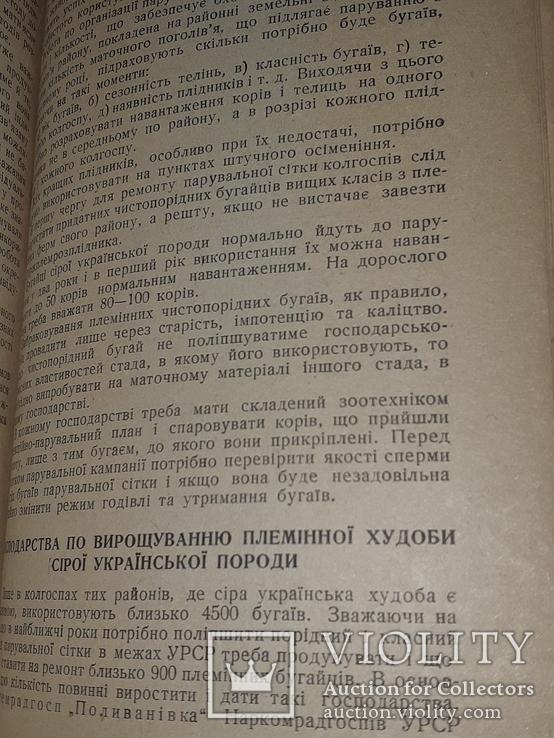 1940 Сiра українська худоба, фото №5
