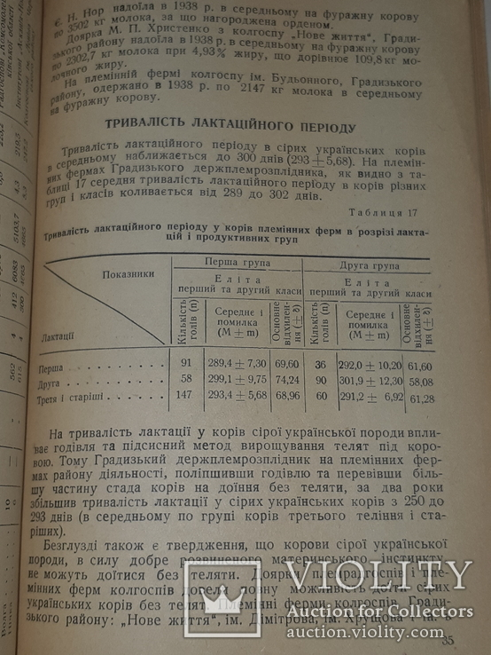 1940 Сiра українська худоба, фото №6