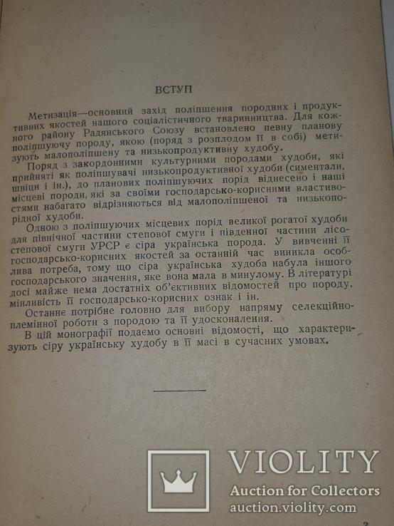 1940 Сiра українська худоба, фото №10