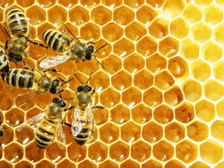 Мед натуральный июль 2018 разнотравья, цветочный