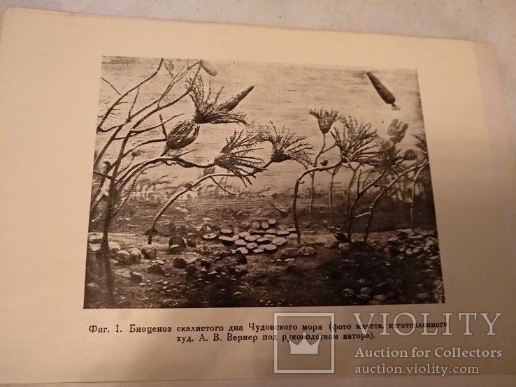 1935 Жизнь в Девонской море