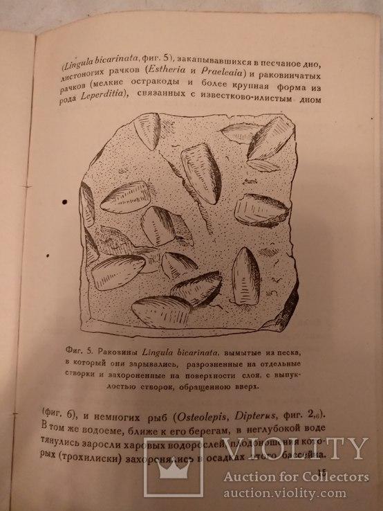1935 Жизнь в Девонской море, фото №8