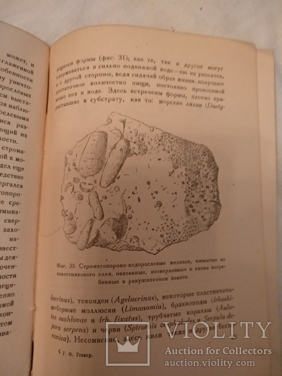 1935 Жизнь в Девонской море, фото №9