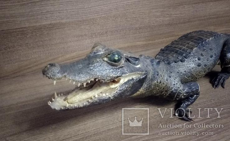 Нильский крокодил, фото №3