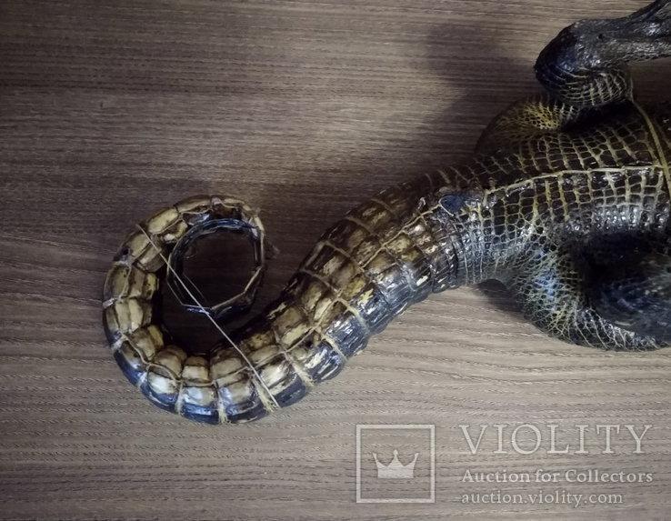 Нильский крокодил, фото №8