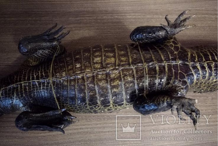 Нильский крокодил, фото №9