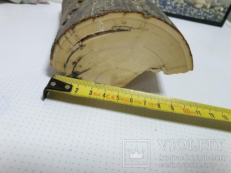 Бивень мамонта 1270грм, фото №5
