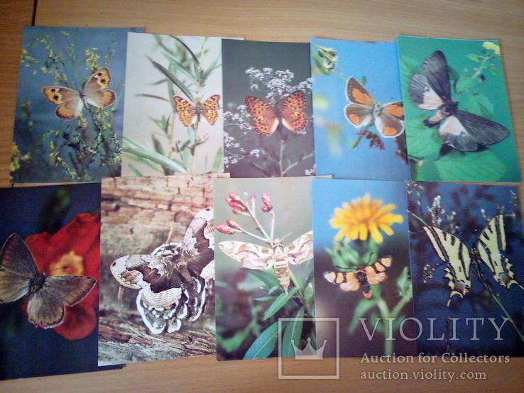 Бабочки Закавказья, набор 18 открю, изд. Планета 1988г, фото №10