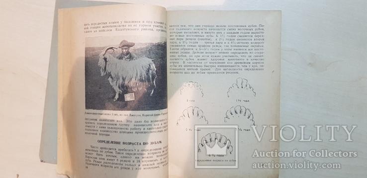 Городское козоводство 1937 год. тираж 3 тыс., фото №6