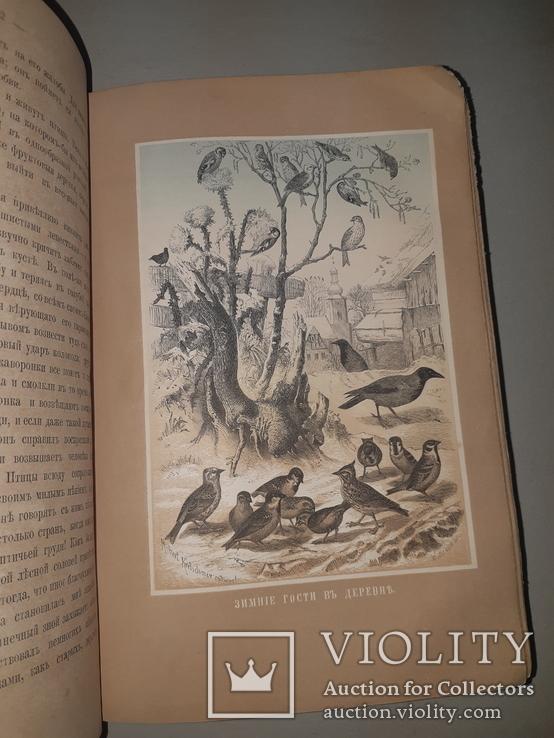 1866 Жизнь птиц с 27 цветными иллюстрациями, фото №7