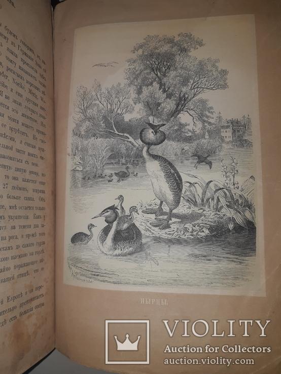 1866 Жизнь птиц с 27 цветными иллюстрациями, фото №8