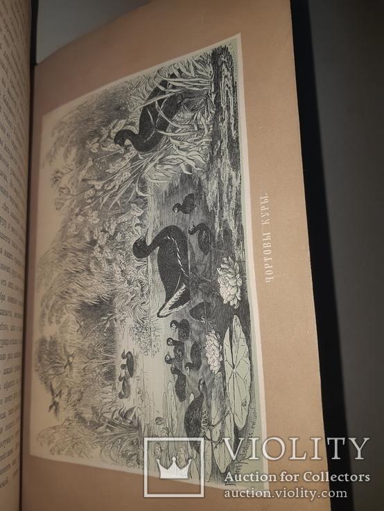 1866 Жизнь птиц с 27 цветными иллюстрациями, фото №12