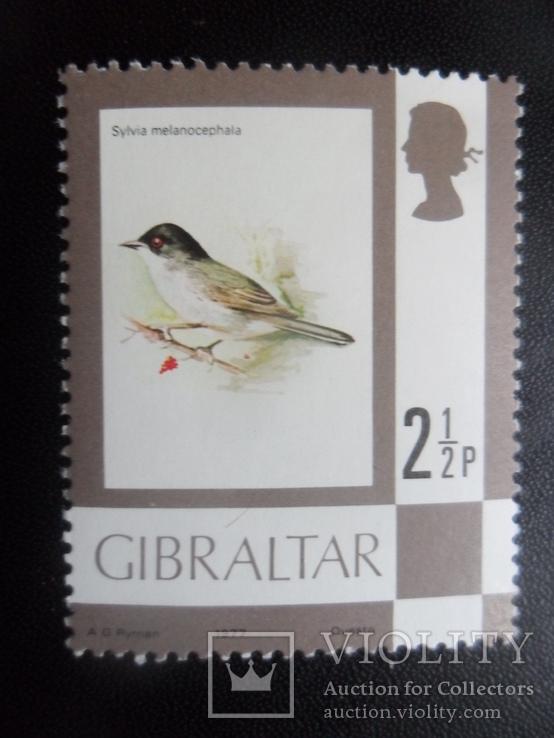 Фауна. Птицы. Брит. Гибралтар. 1977 г. текст на обороте, фото №2