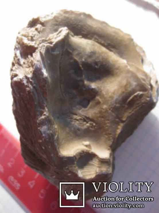 Половинка Двустворчатого Моллюска, фото №6