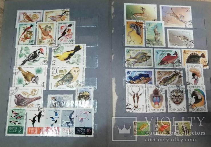 Альбом с марками Животный мир (птицы, рыбы и пр.), фото №4