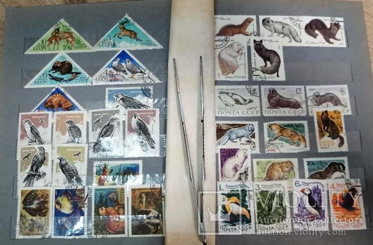 Альбом с марками Животный мир (птицы, рыбы и пр.), фото №5