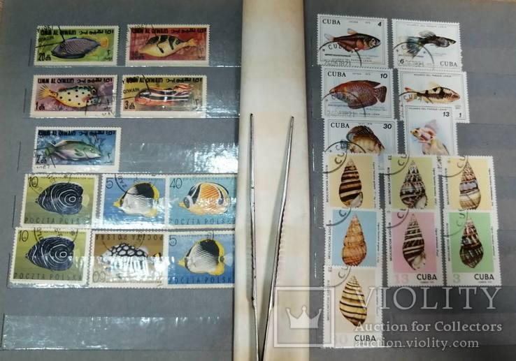 Альбом с марками Животный мир (птицы, рыбы и пр.), фото №7