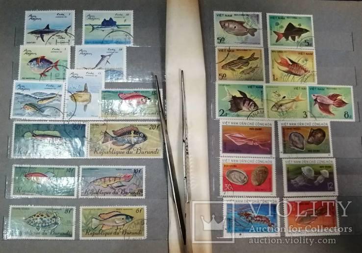 Альбом с марками Животный мир (птицы, рыбы и пр.), фото №8