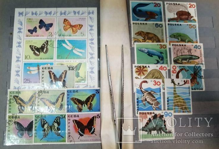 Альбом с марками Животный мир (птицы, рыбы и пр.), фото №9