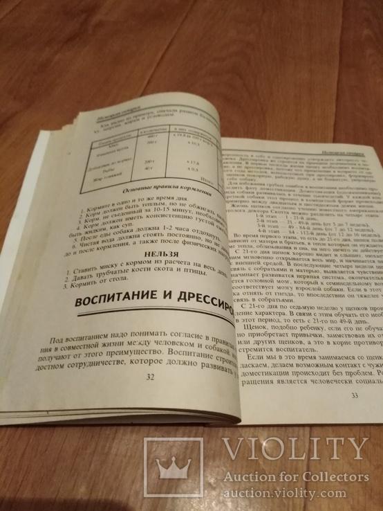Немецкая овчарка воспитание., фото №4