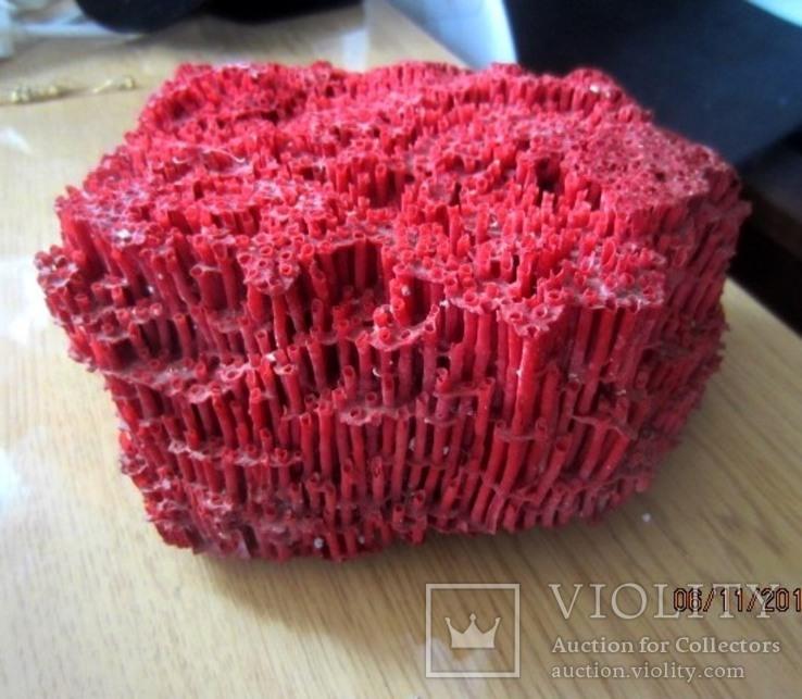 Натуральный красный коралл  (Tubipora musica) 192 гр, фото №4