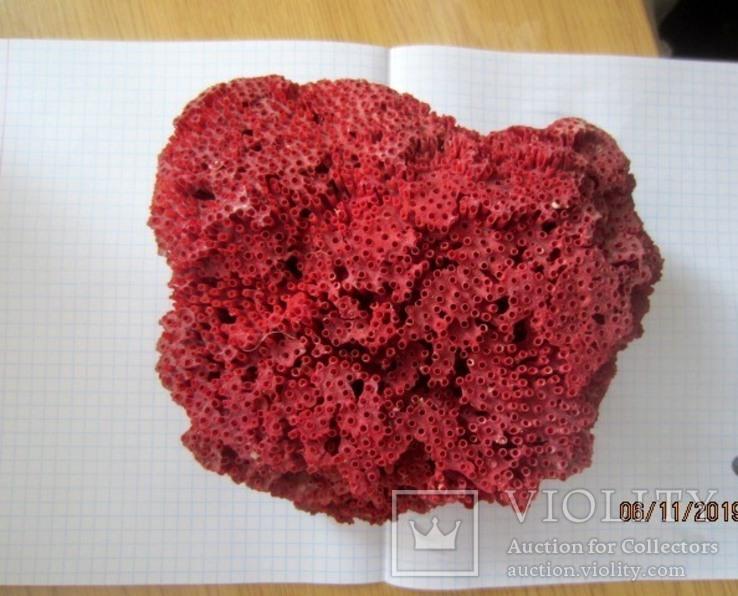Натуральный красный коралл  (Tubipora musica) 192 гр, фото №5