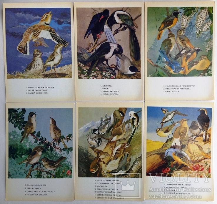 1983  Птицы России. Забайкалье. Выпуск 1. 32 открытки., фото №4