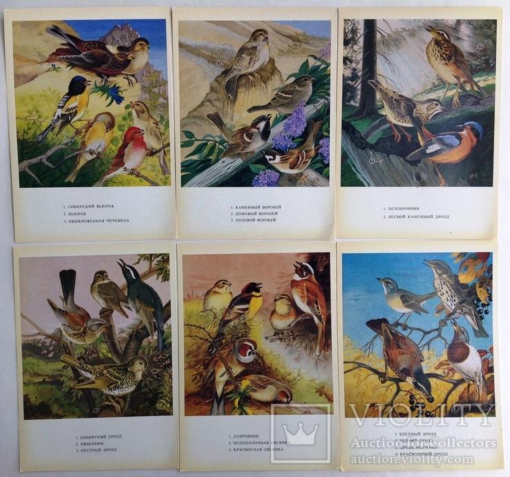 1983  Птицы России. Забайкалье. Выпуск 1. 32 открытки., фото №5