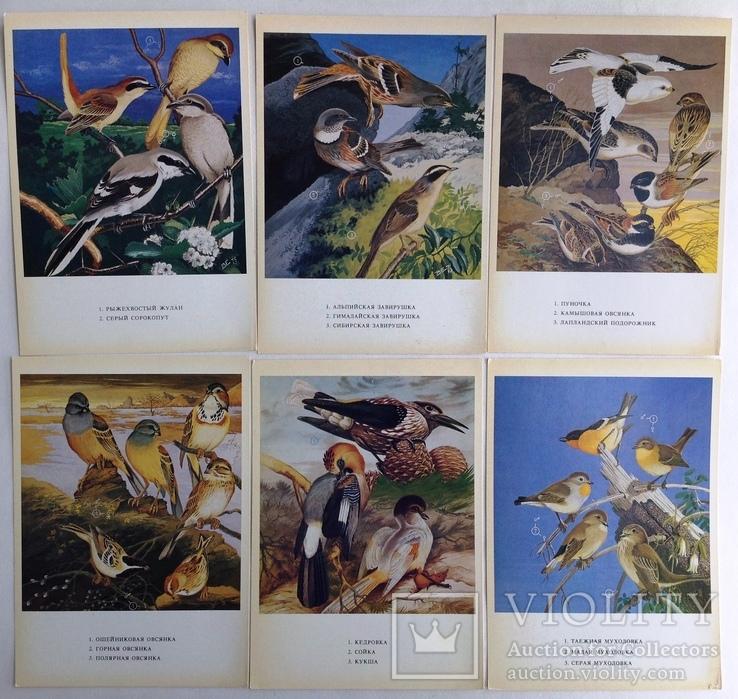 1983  Птицы России. Забайкалье. Выпуск 1. 32 открытки., фото №6