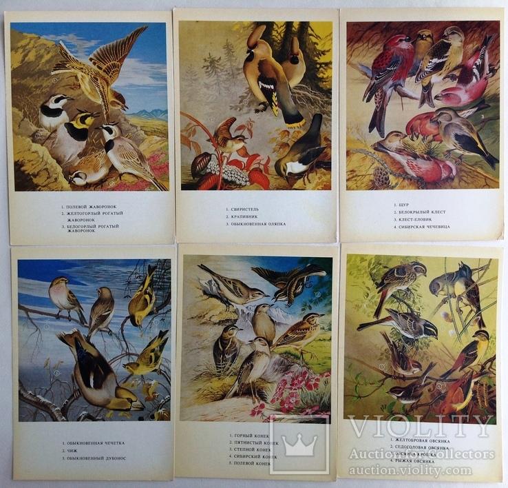 1983  Птицы России. Забайкалье. Выпуск 1. 32 открытки., фото №7