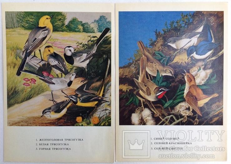1983  Птицы России. Забайкалье. Выпуск 1. 32 открытки., фото №8