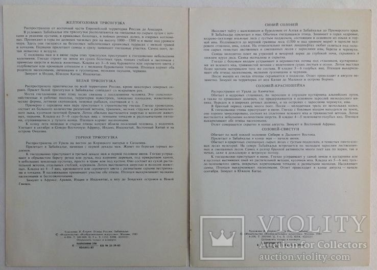 1983  Птицы России. Забайкалье. Выпуск 1. 32 открытки., фото №9
