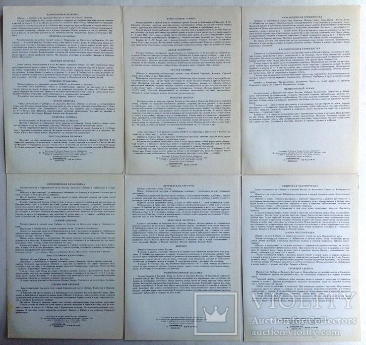 1983  Птицы России. Забайкалье. Выпуск 1. 32 открытки., фото №10
