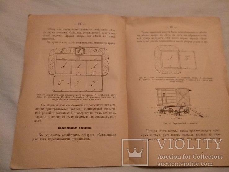 1918 Птичники устройство, фото №5