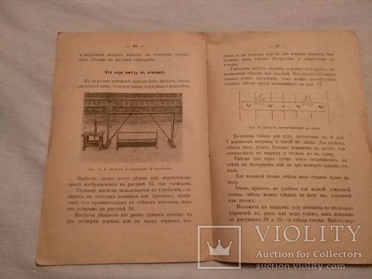 1918 Птичники устройство, фото №6