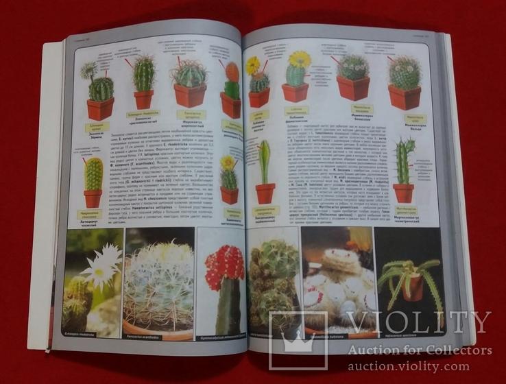 Всё о комнатных растениях.Д-р Д.Г.Хессайон 2004г., фото №6
